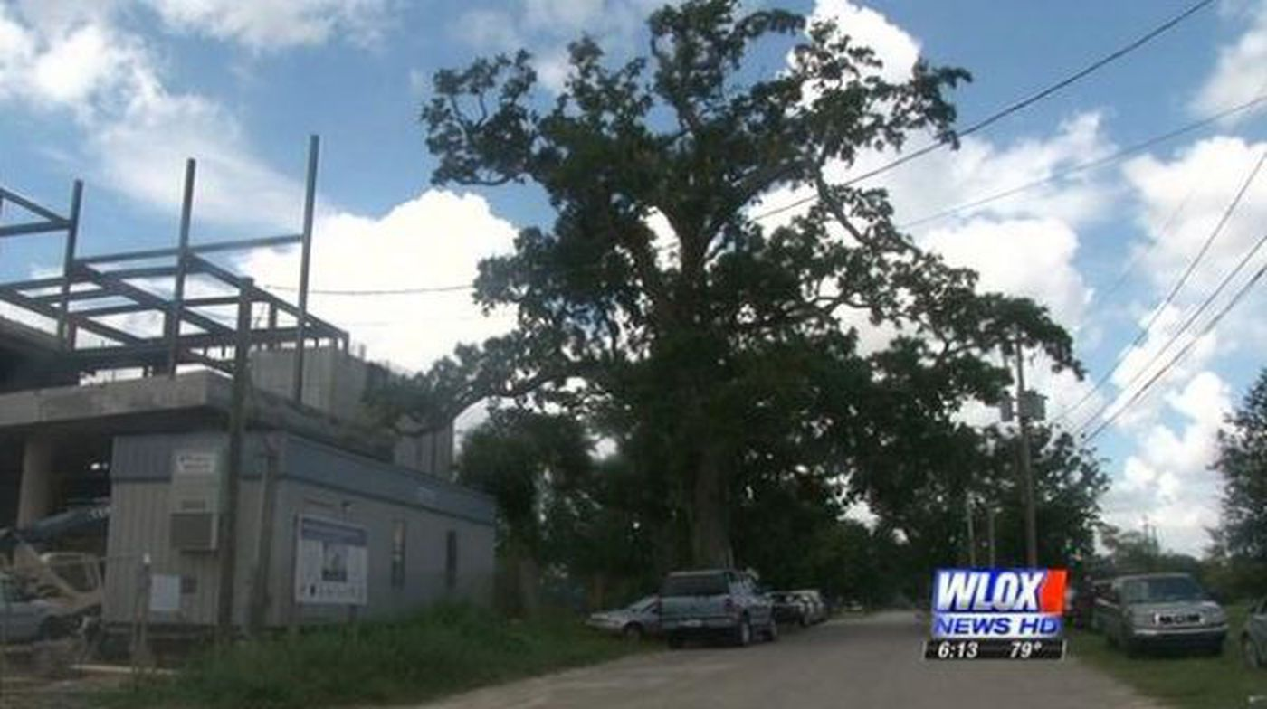 Biloxi Arborist Explains What Protected Trees Really Means