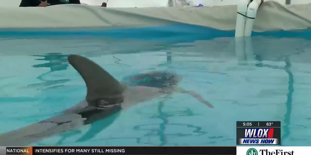 Dolphin making steady recovery at IMMS