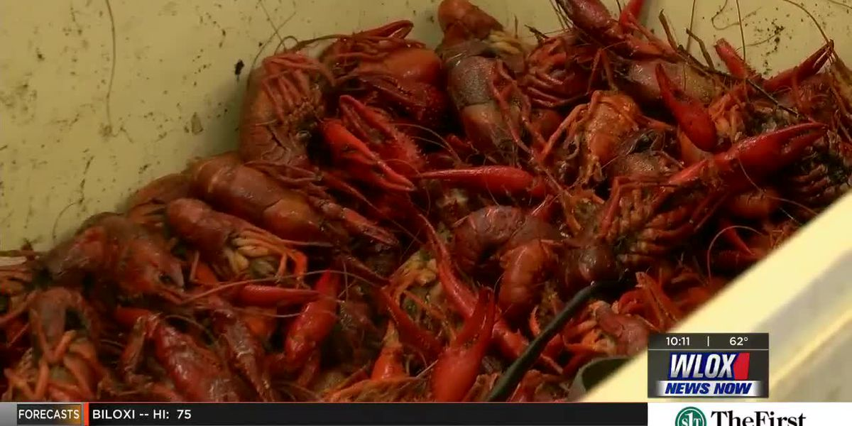 Crawfish is an Easter tradition for many on the Coast