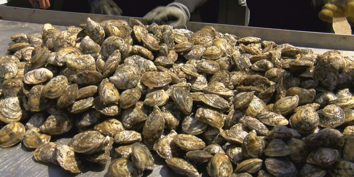 The Oyster is Our World on Flipboard by Taryn Brice-Rowland