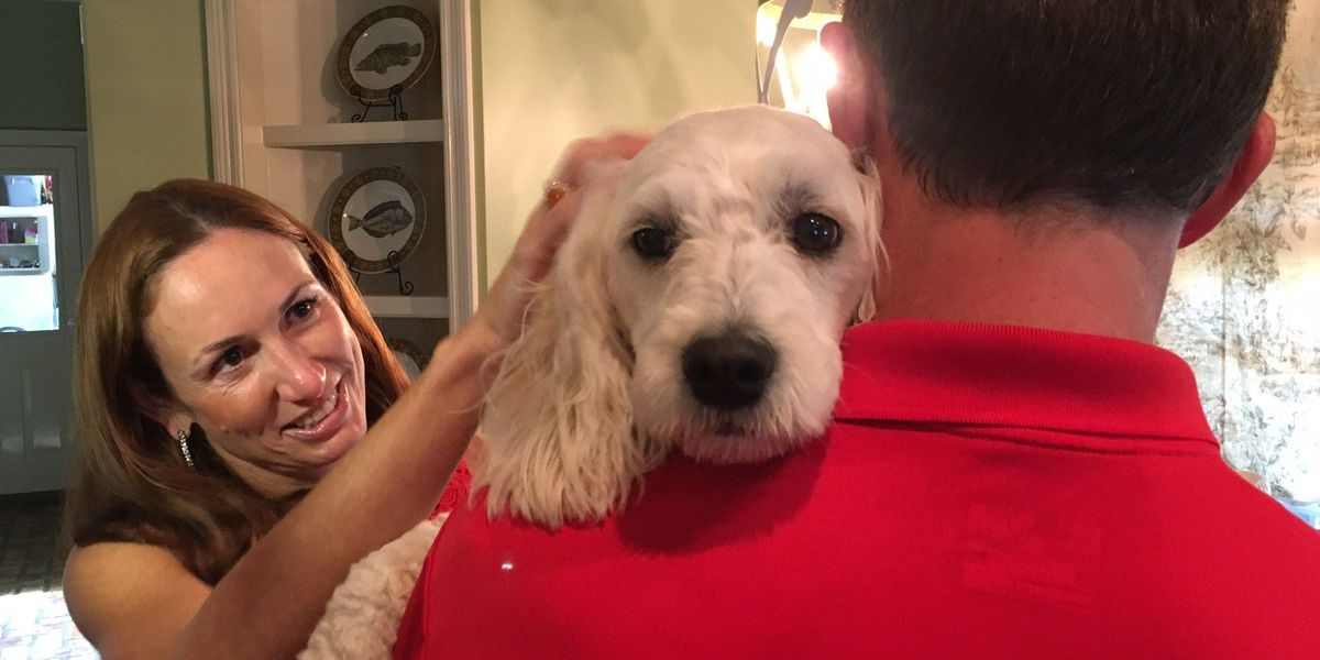 Social media leads family to lost dog