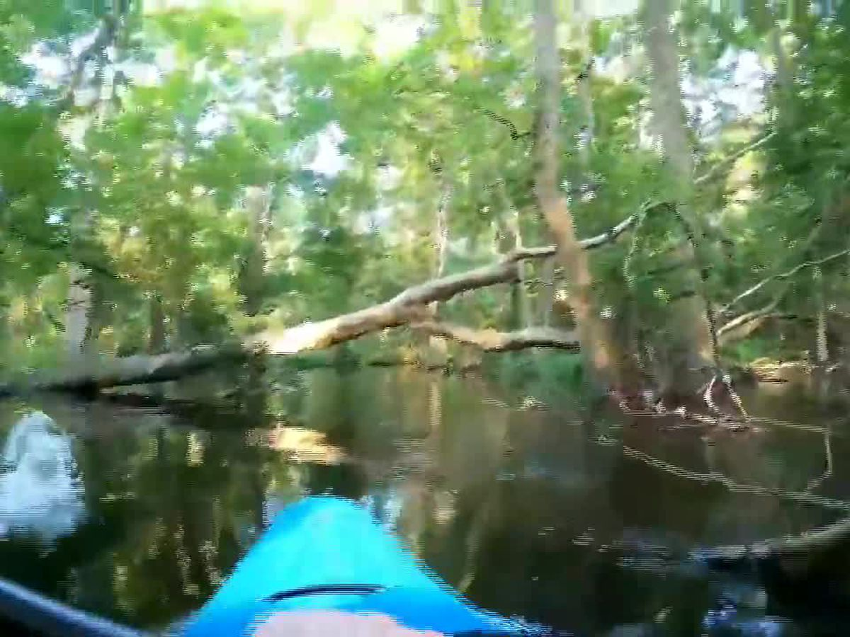Kayaker shares more about his close encounter with an alligator on N.C. river