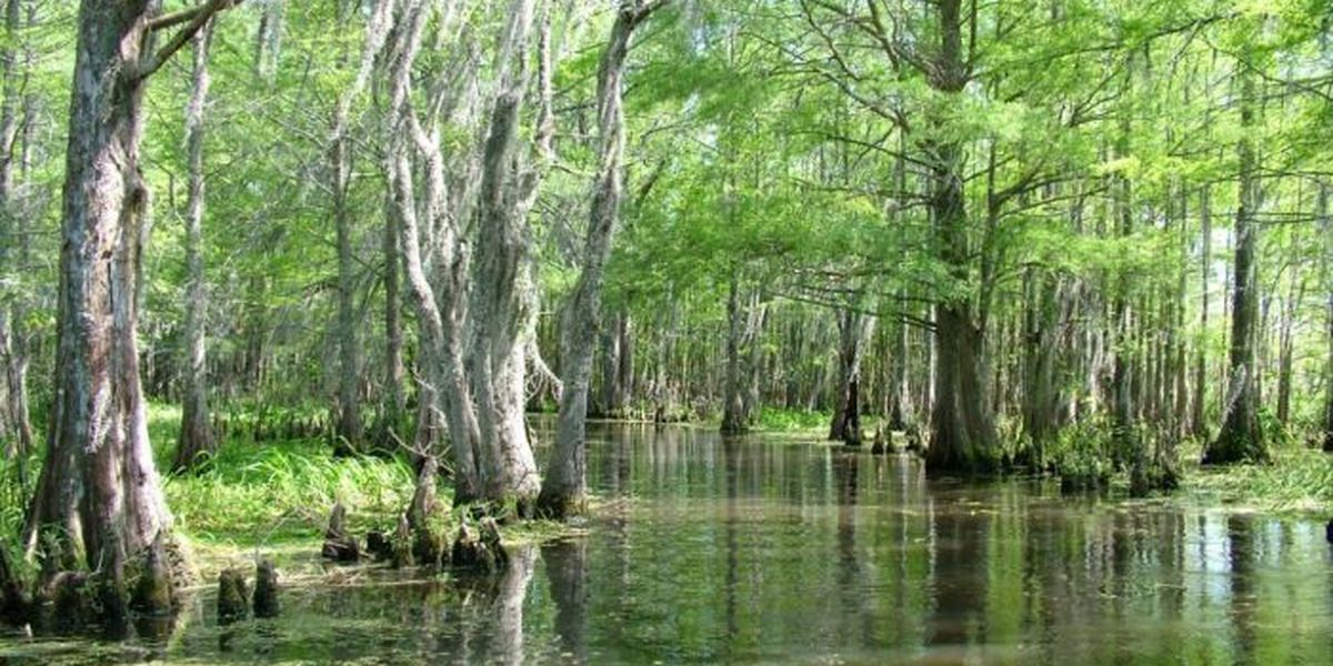 Pearl River among most endangered waterways in America