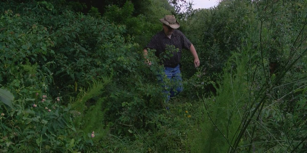 Gulfport, CSX Railroad blame each other for uncut weeds