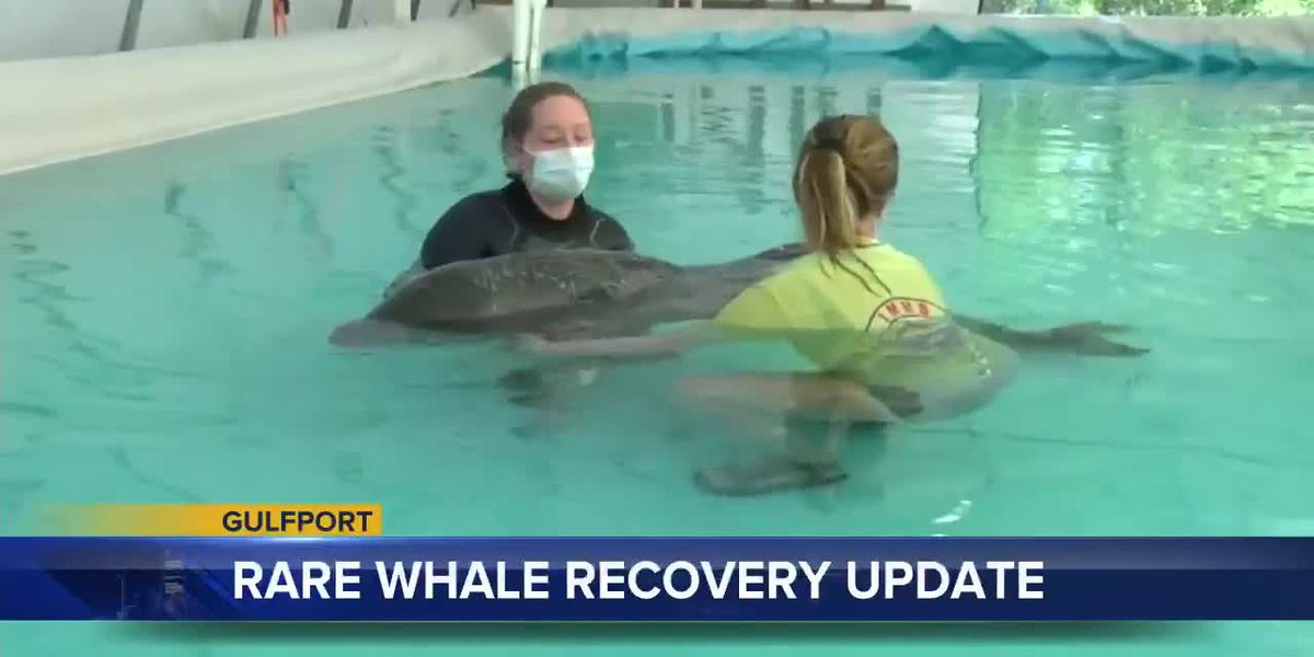 UPDATE: Rare, melon-headed whale recovering at IMMS