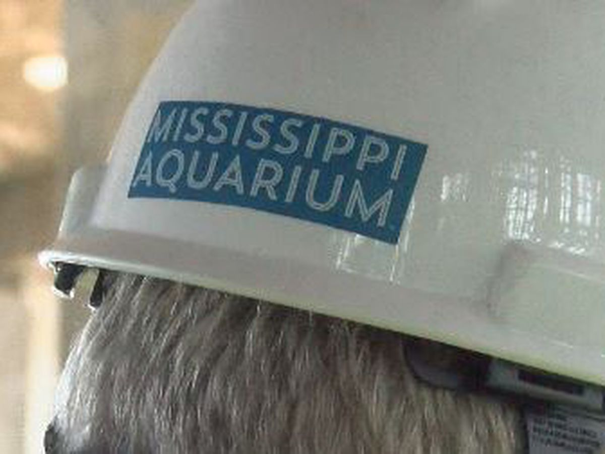 Behind-the-fences look at progress of Mississippi Aquarium