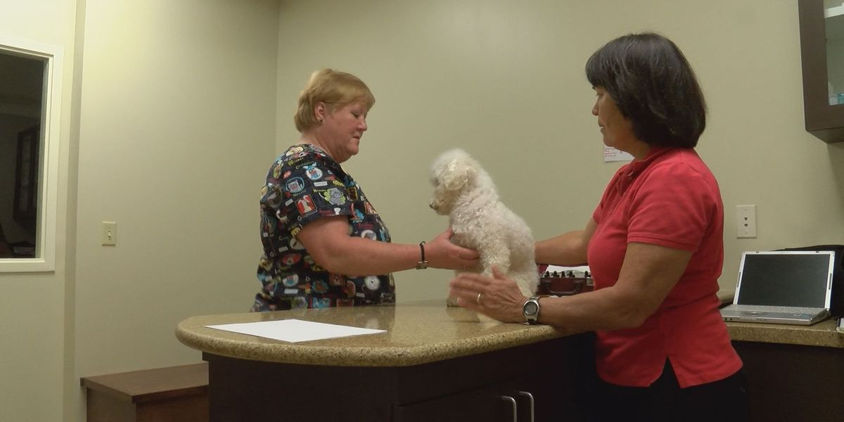 Pet owners turning to acupuncture to help animals