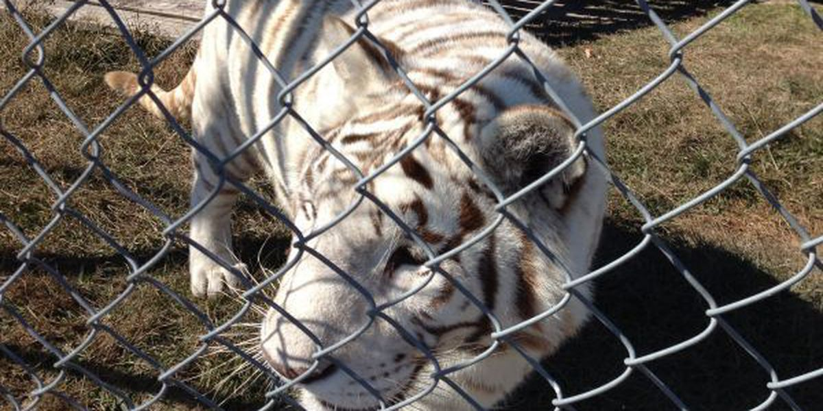 Visit a wild kingdom in South Mississippi