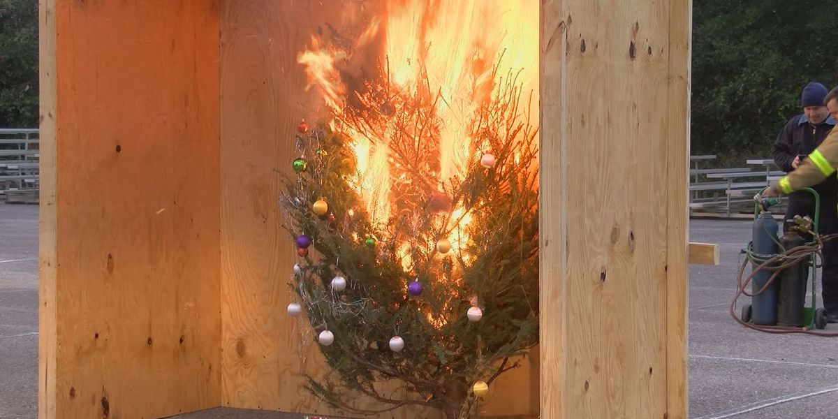 Fire inspector gives tips for Christmas tree safety