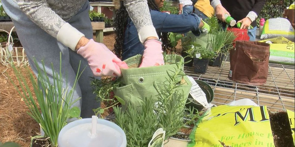 Early spring celebration includes building an herb garden