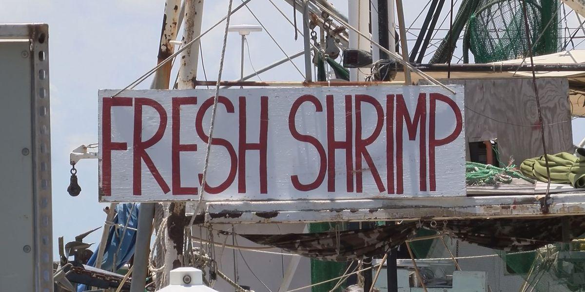 Fisherman and tourists prepare for shrimp season