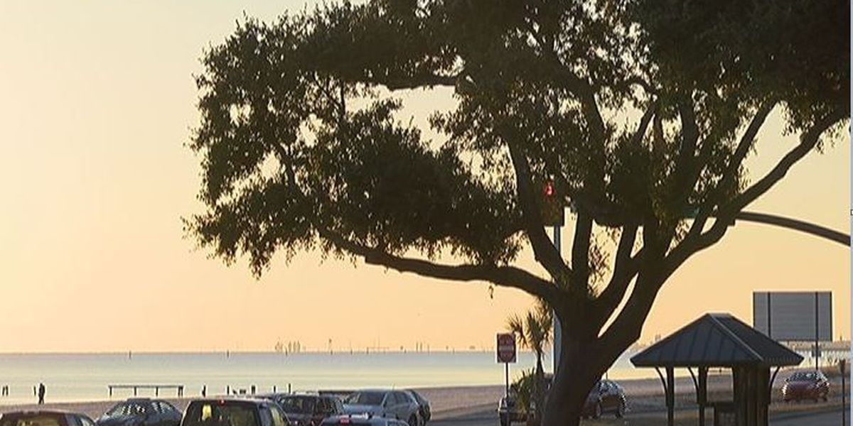 Residents are vocal with Biloxi city council about protecting trees