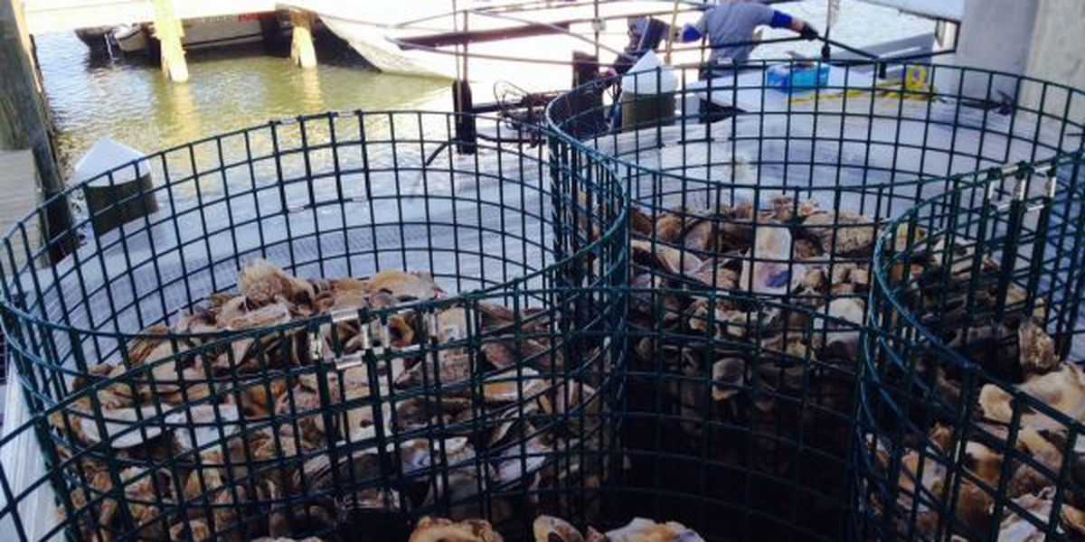 Innovative aquaculture program grows oysters