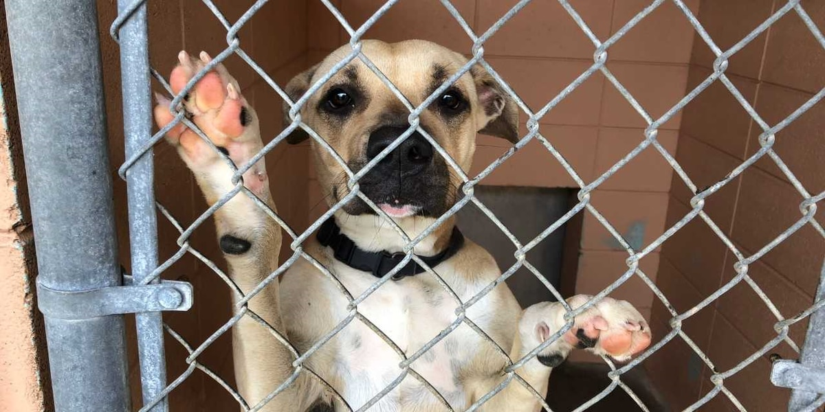 Jackson County Animal Shelter overcrowding at critical levels