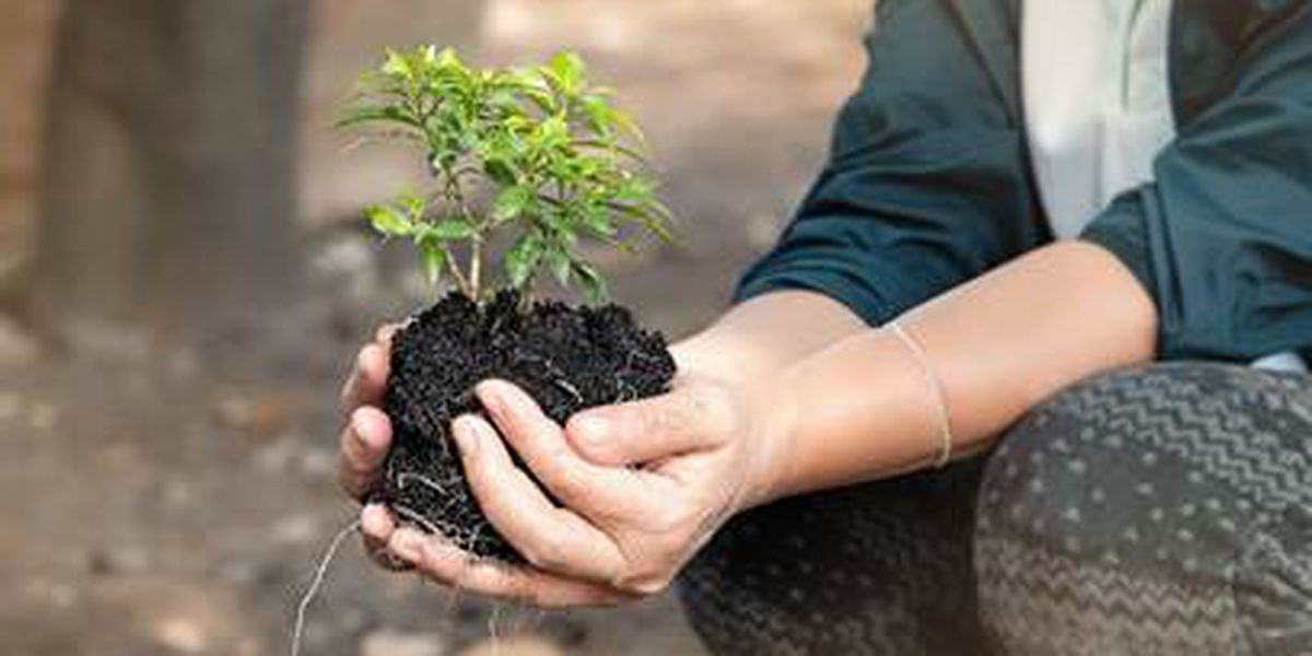South Miss. events to recognize state Arbor Day