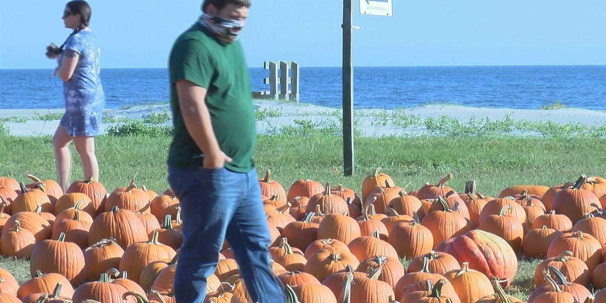 Beachside pumpkin patch in Pass Christian prepares for Zeta