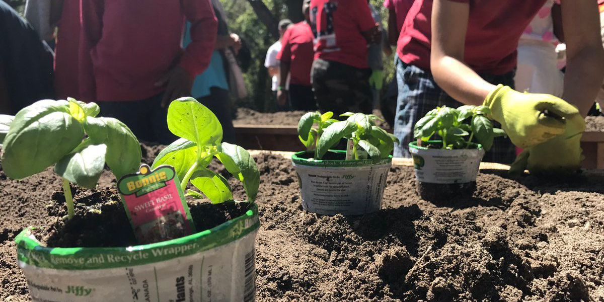 Students plant seeds to help better community