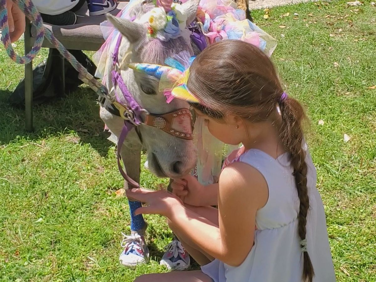 Therapy horse group makes a girl's unicorn dreams come true