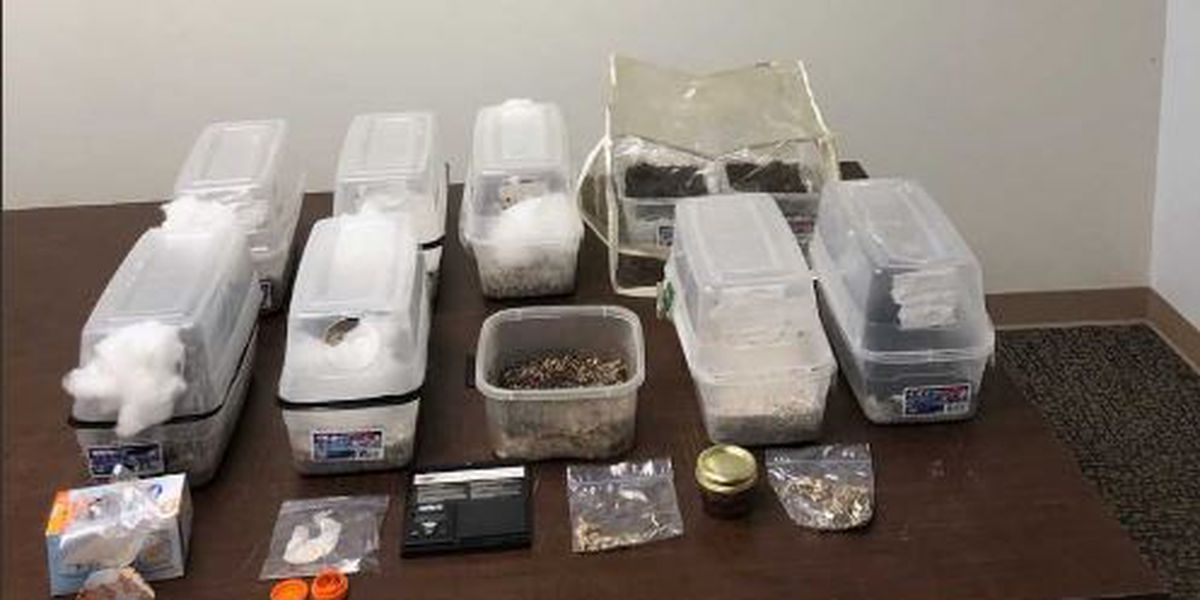Deputies find mushrooms, meth & more in Hancock County drug bust