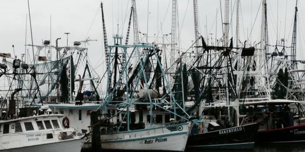 Oyster season off to a freezing start today