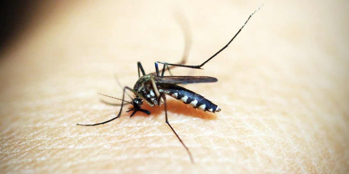 2nd West Nile Virus case reported in Miss.