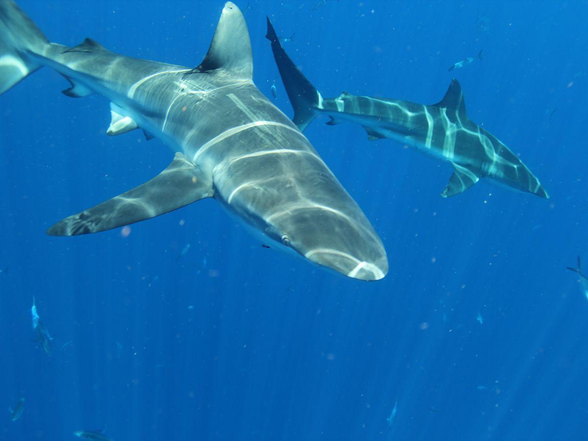 USM Ocean Science school starting Shark Week social media campaign