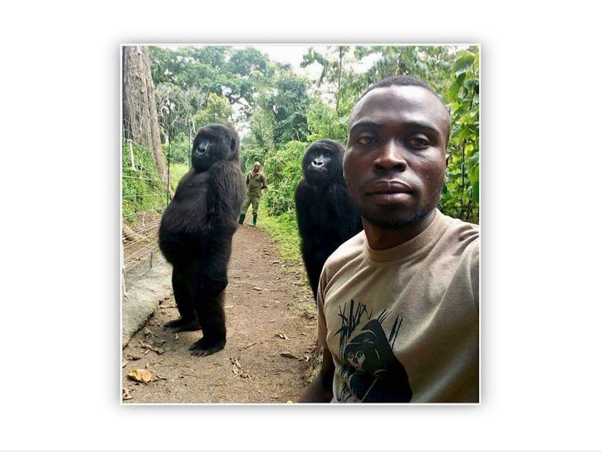 Park ranger selfie: Gorillas vogue for camera
