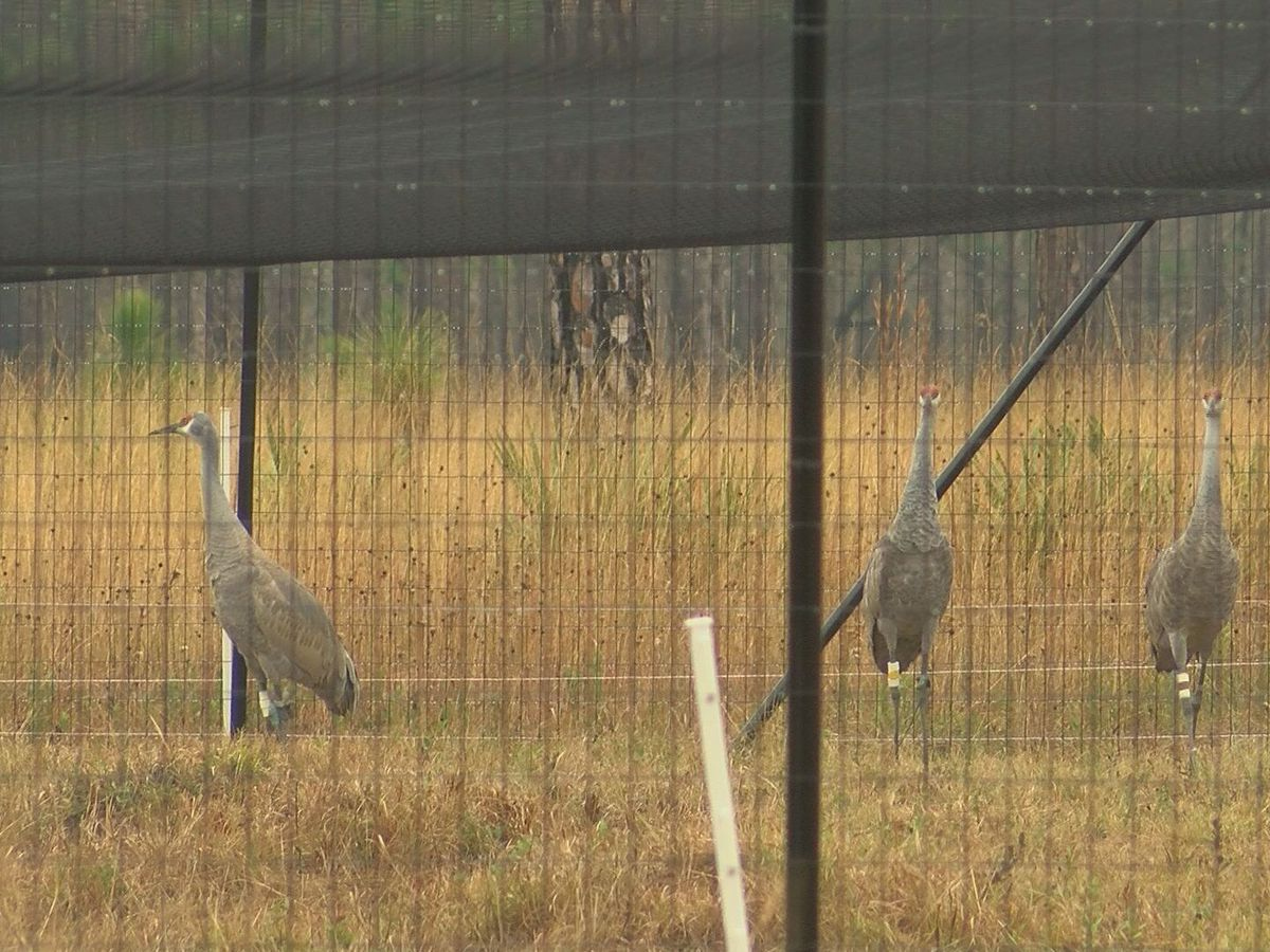 Families learn more about wildlife at 2019 Crane Fest