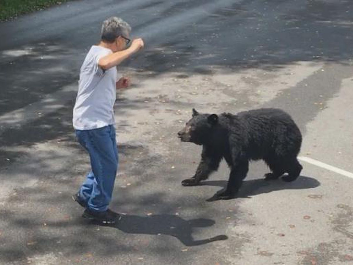 WATCH: Tenn. park visitor gets dangerously close to mother bear and cubs