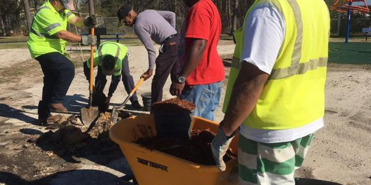 Coast gets greener on Arbor Day
