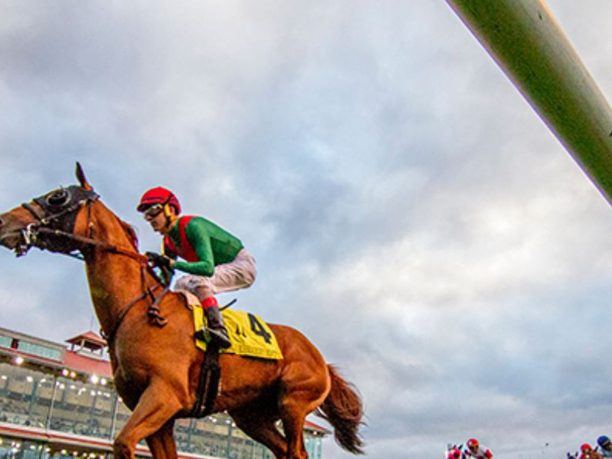 4 racehorse deaths at New Orleans track spark concern