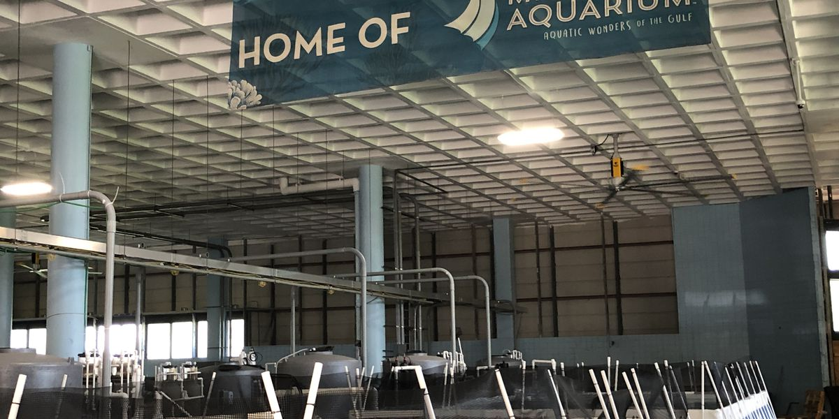 Here's an exclusive look inside the Mississippi Aquarium Research Center
