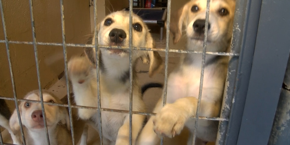Dixie Adoptables awarded grant to offer low-cost spay and neuter