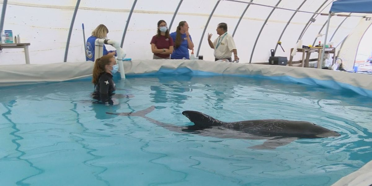 Rare, melon-headed whale shows signs of improvement at IMMS