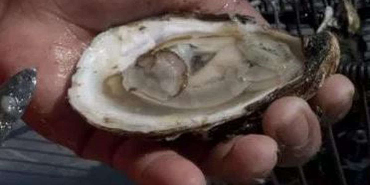 Delay of oyster season opening causes concerns for Coast fishermen