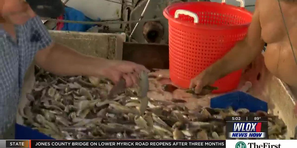 Mississippi shrimp season opens with disappointing results