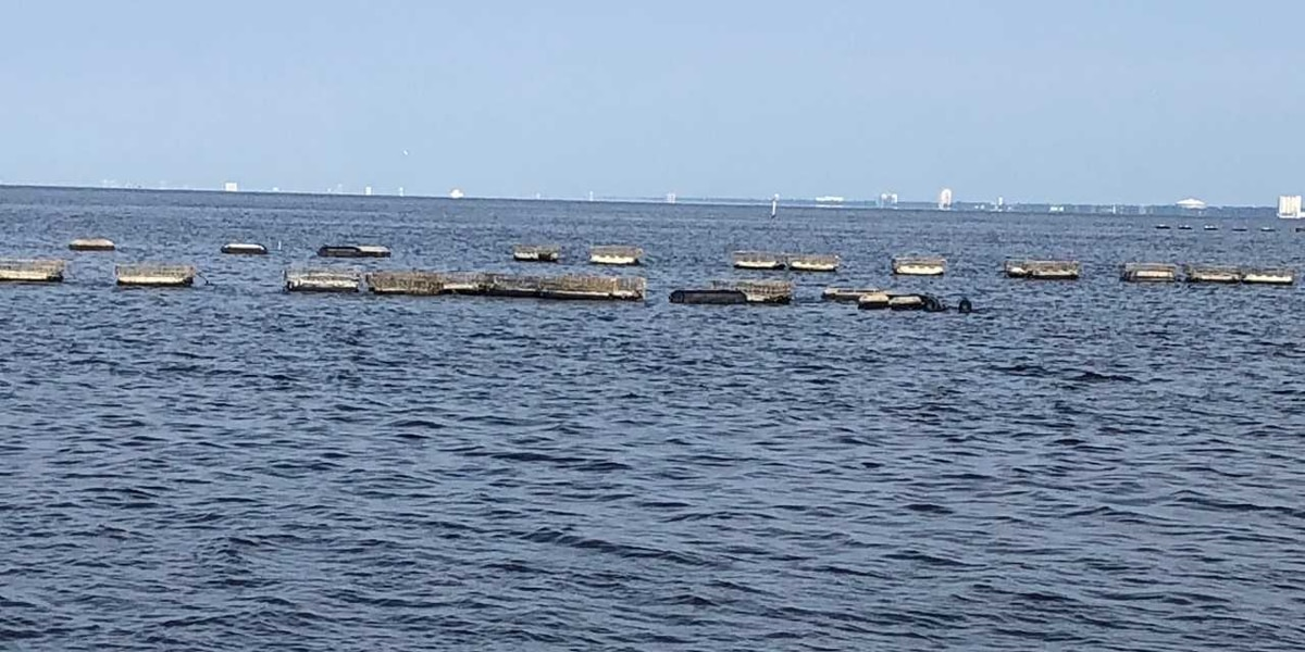 Deer Island oyster farm hard hit by spillway freshwater intrusion