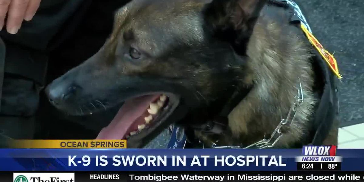 Jester becomes first K9 security officer at a hospital campus in Mississippi