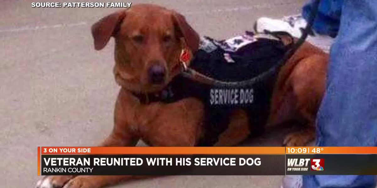 A veteran and his K-9 friend are together again