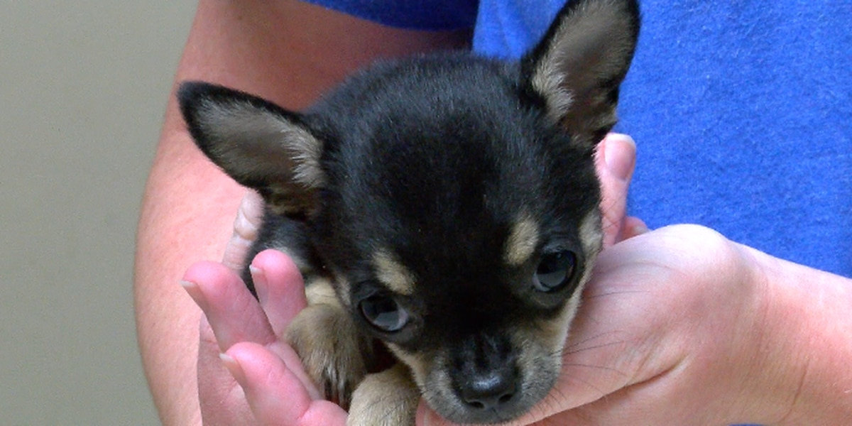 Tips for keeping pets safe and calm during fireworks