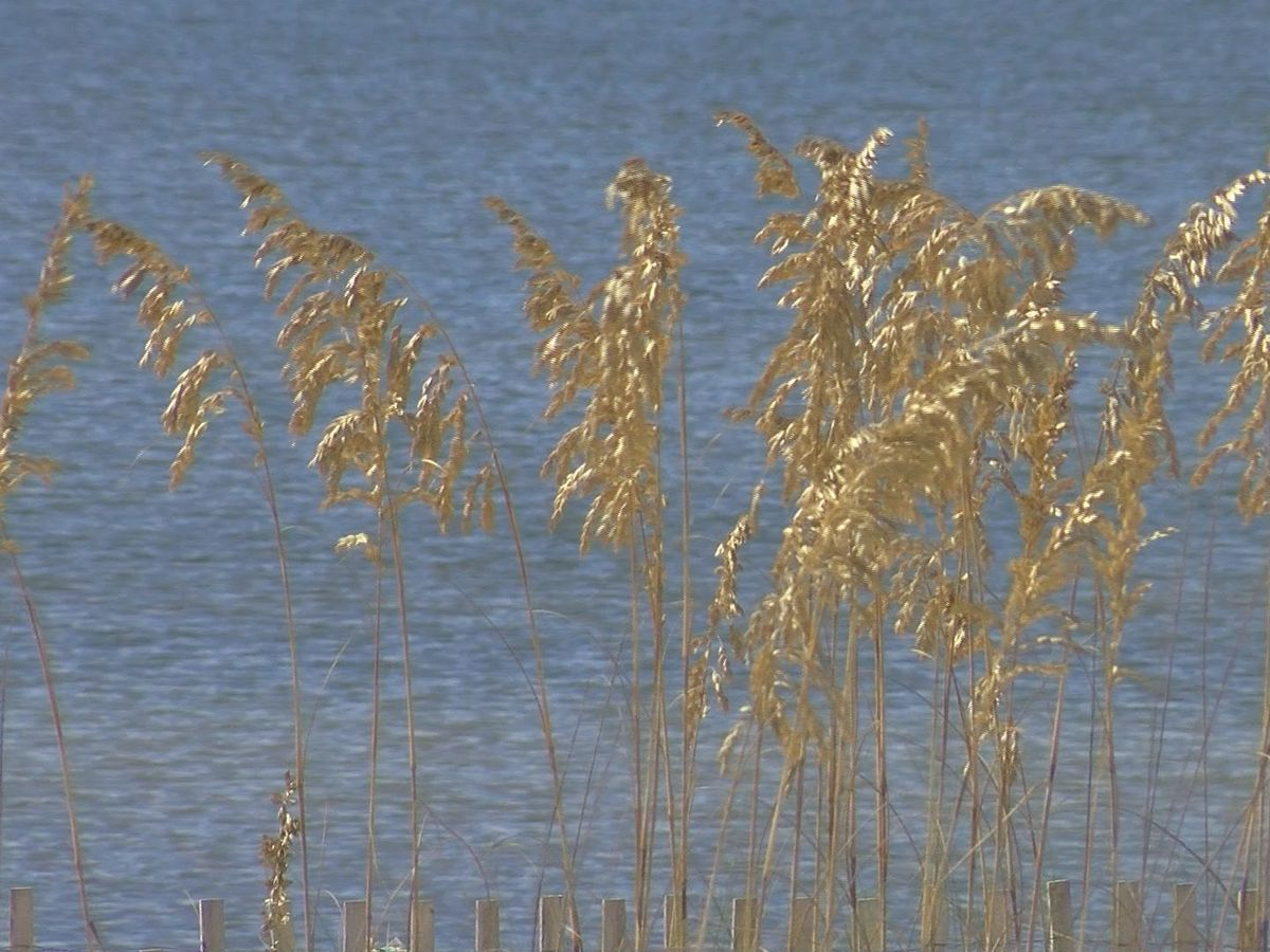 More sand dunes, sea oats coming to Harrison County beaches