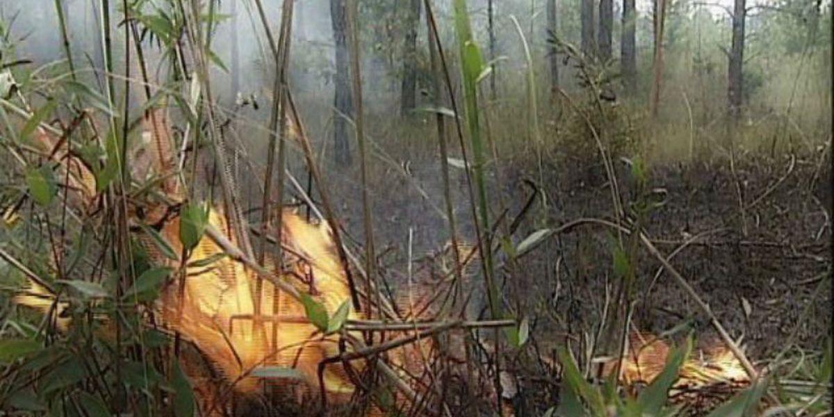 Controlled burns to begin in Davis Bayou Area