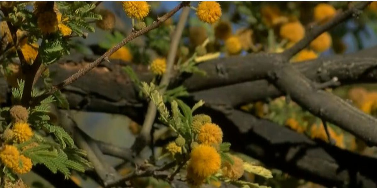 Spring has sprung: Allergy signs to lookout for and how to relieve symptoms