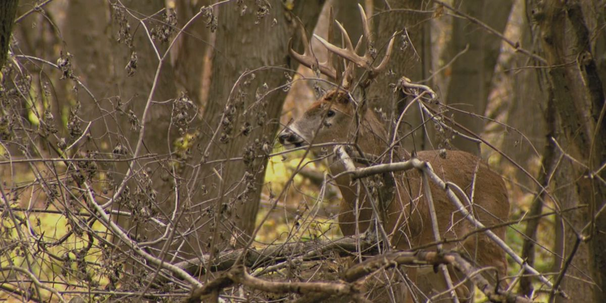 Conservation officers remind hunters of CWD testing sites as deer hunting season begins