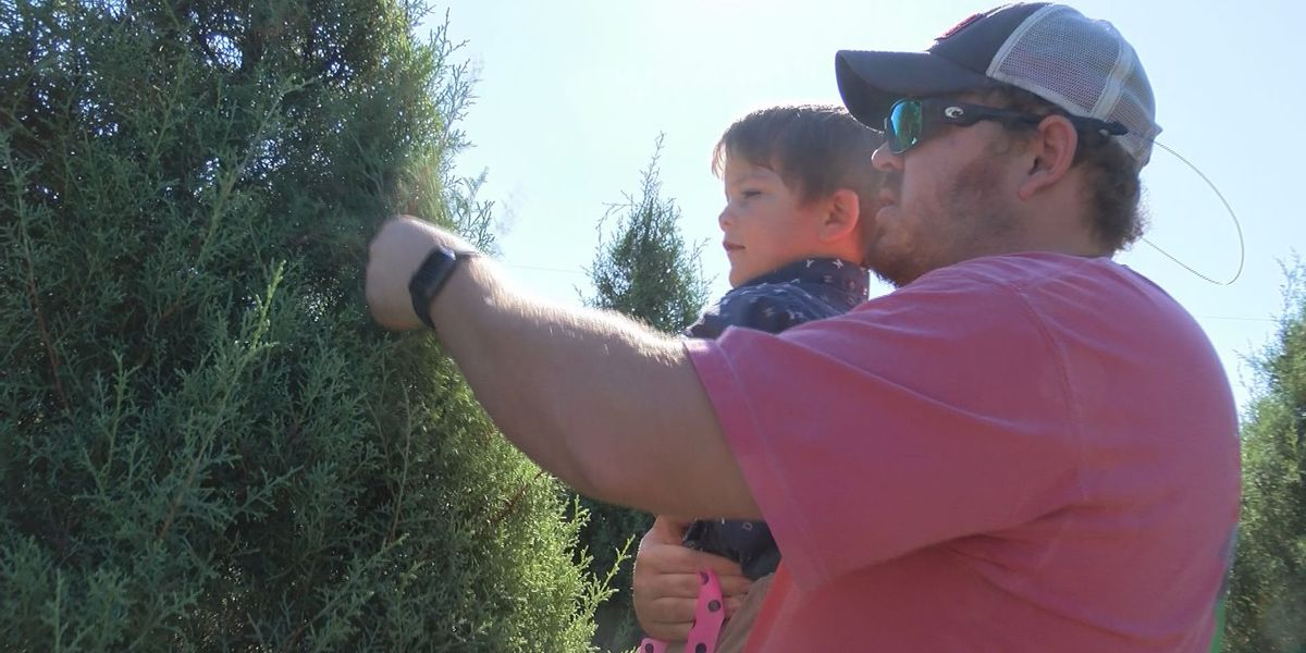 South Mississippi families on the hunt for perfect Christmas tree