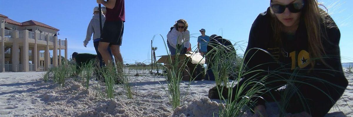 Locals plant sea oats for school, beach erosion defense