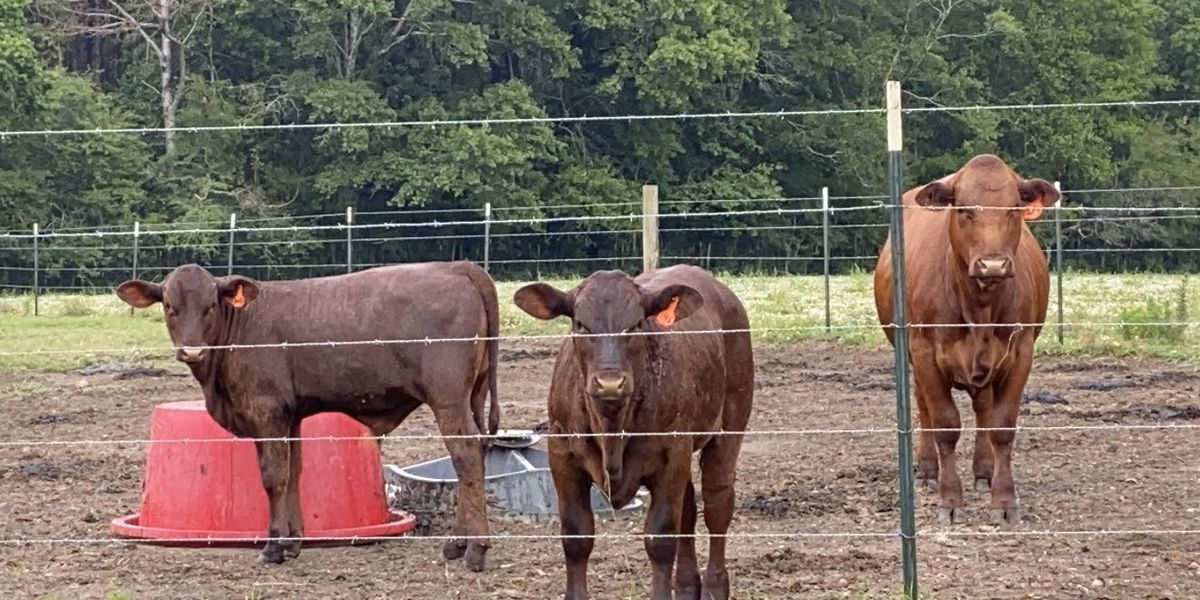 Miss. Dept. of Agriculture changes rules on how farmers can sell meat products