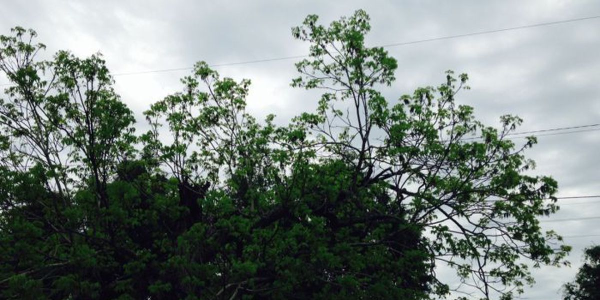 Update: Seven customers still without power