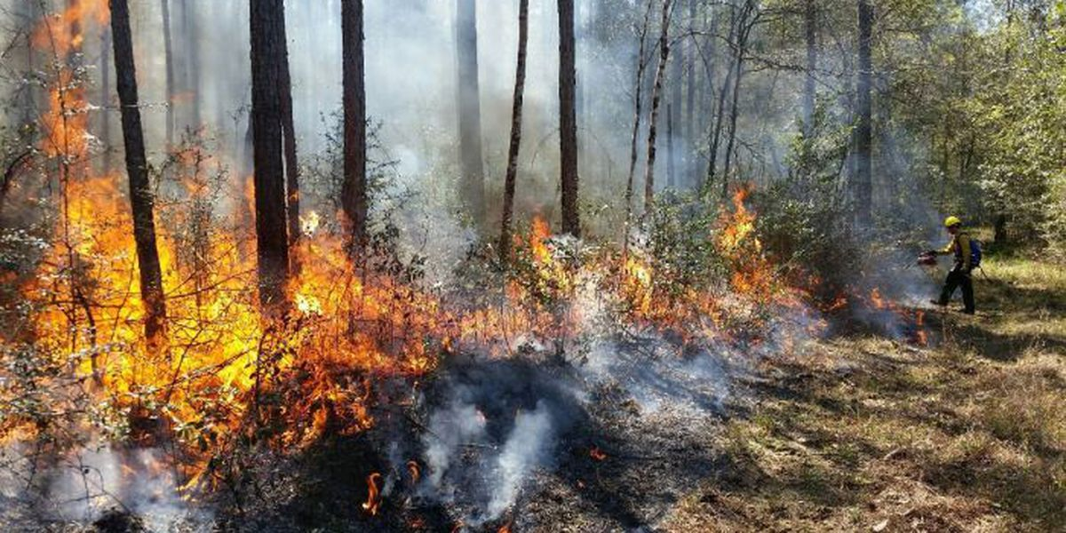 Prescribed burn in Jackson Co. will cover 1,300 acres