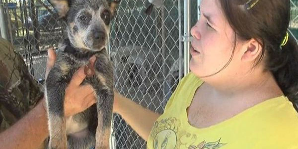 Number of dogs seized from Picayune home climbs to 76